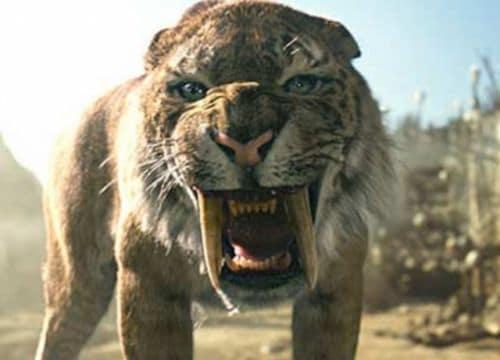 Le Smilodon est également appelé « Le Tigre à dents de sabre ».