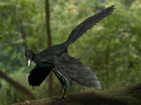 Archaeopteryx avec des plumes, dont les fossiles ont été découvert en Bavière (Allemagne) .