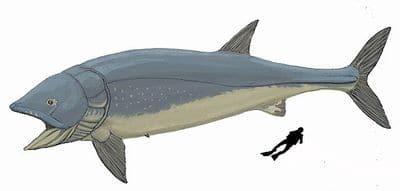 Le poisson Leedsichthys.