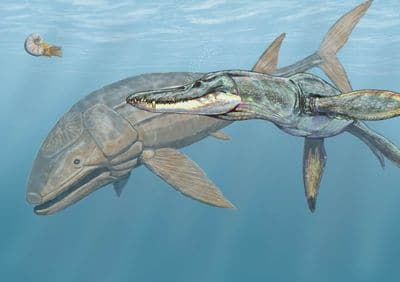 Leedsichthys mesurait jusqu'à 16 mètres.