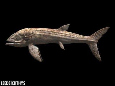 Le plus gros poisson connu.