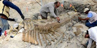 Hadrosaure trouvé au Mexique.