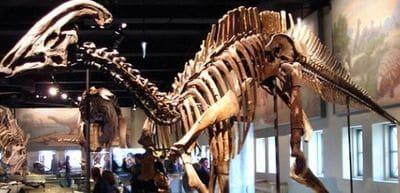 Un hadrosaure.