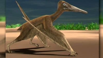 Ptérosaure de Crayssac en France.