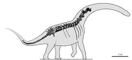 Overosaurus paradasorum.