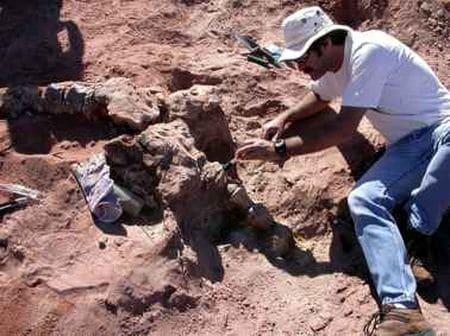Fossile de dinosaure en Argentine.