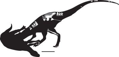 Le dinosaure Siats meekerorum.