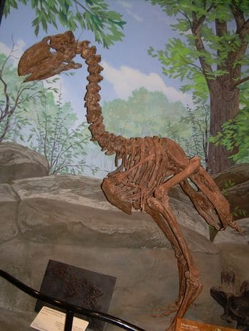 Squelette fossile de l'oiseaux Gastornis.