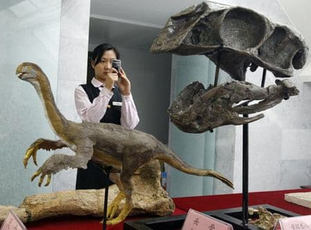 Fossile de Gigantoraptor.