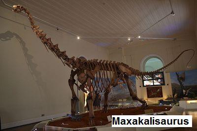 Dinosaure Maxakalisaurus.