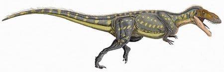 Torvosaurus tanneri.