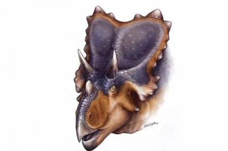 Mercuriceratops gemini.