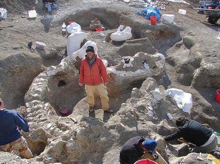 Fossile du dinosaure Dreadnoughtus.