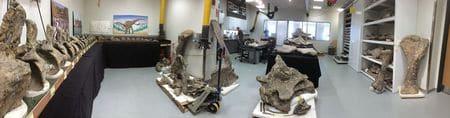 Fossile de Dreadnoughtus schrani.