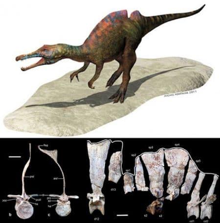 Le dinosaure Ichthyovenator.