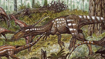 Le dinosaure Tachiraptor admirabilis.