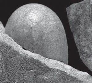 Un oeuf de dinosaure Sankofa pyrenaica partiellement conservé et dégagé du grès dans lequel il a été trouvé. Cette découverte renforce le lien entre dinosaures et oiseaux actuels.