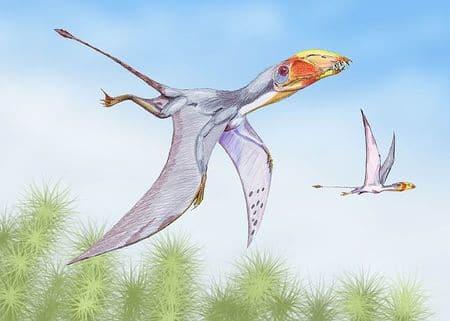 Dimorphodon, un reptile volant de la famile des ptérosaures qui a vécu au temps des dinosaures.