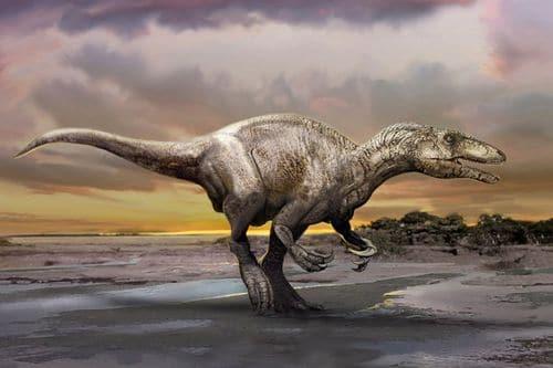 Le dinosaure Murusraptor.