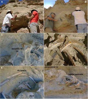 Site de fouilles paléontologiques où ont été trouvés les fossiles du dinosaure Murusraptor.