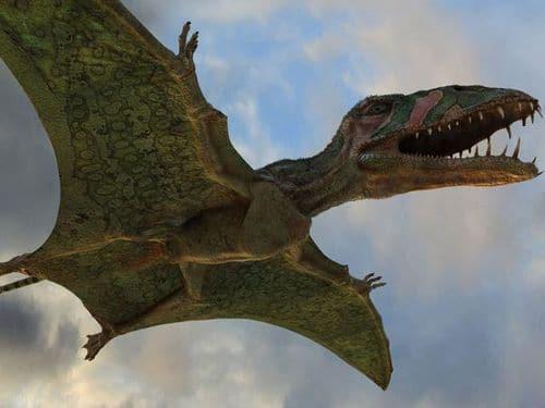 Le Ptérosaure Dimorphodon devait pouvoir marcher à quatre pattes.