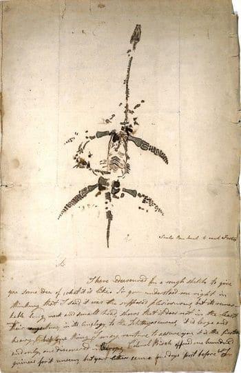 Lettre autographe concernant la découverte de Plesiosaurus de Mary Anning.
