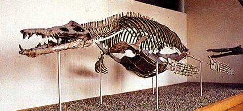 Squelette fossile du Pliosaure Liopleurodon ferox.