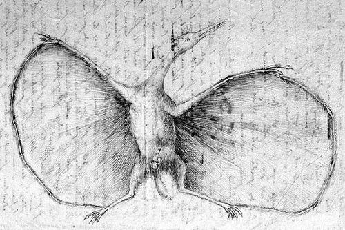 Un des deux dessins de Pterodactylus antiquus de Jean Hermann de Strasbourg, envoyé à George Cuvier en 1800.