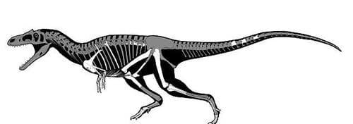Fossiles retrouvés du dinosaure Gualicho.