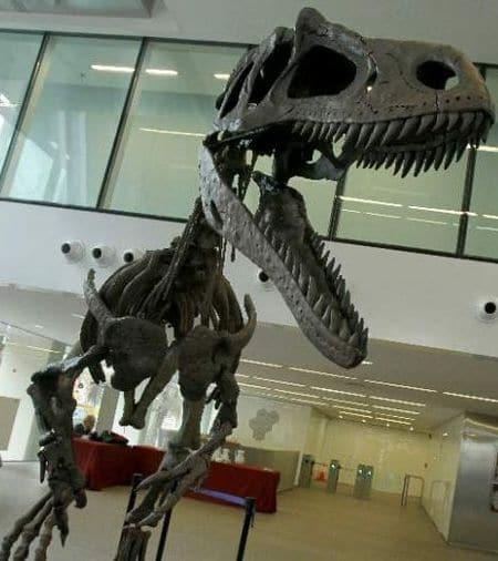 Squelette fossile du dinosaure Gualicho shinyae.