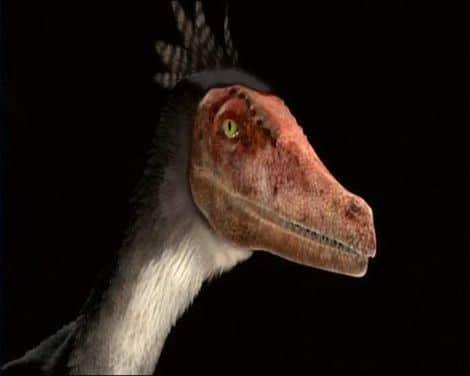 Velociraptor représenté avec des plumes.